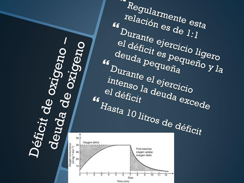 Déficit de oxigeno – deuda de oxigeno Regularmente esta relación es de 1:1 Regularmente esta relación es de 1:1 Durante ejercicio ligero el déficit es