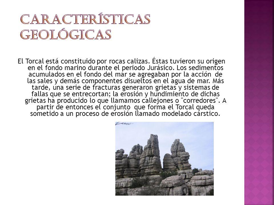 El Torcal está constituido por rocas calizas.
