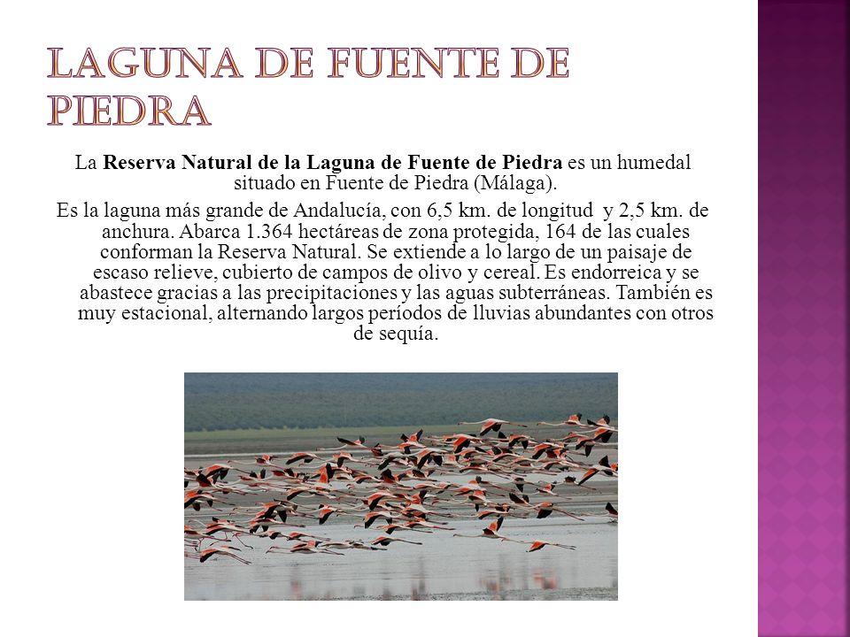 La Reserva Natural de la Laguna de Fuente de Piedra es un humedal situado en Fuente de Piedra (Málaga).