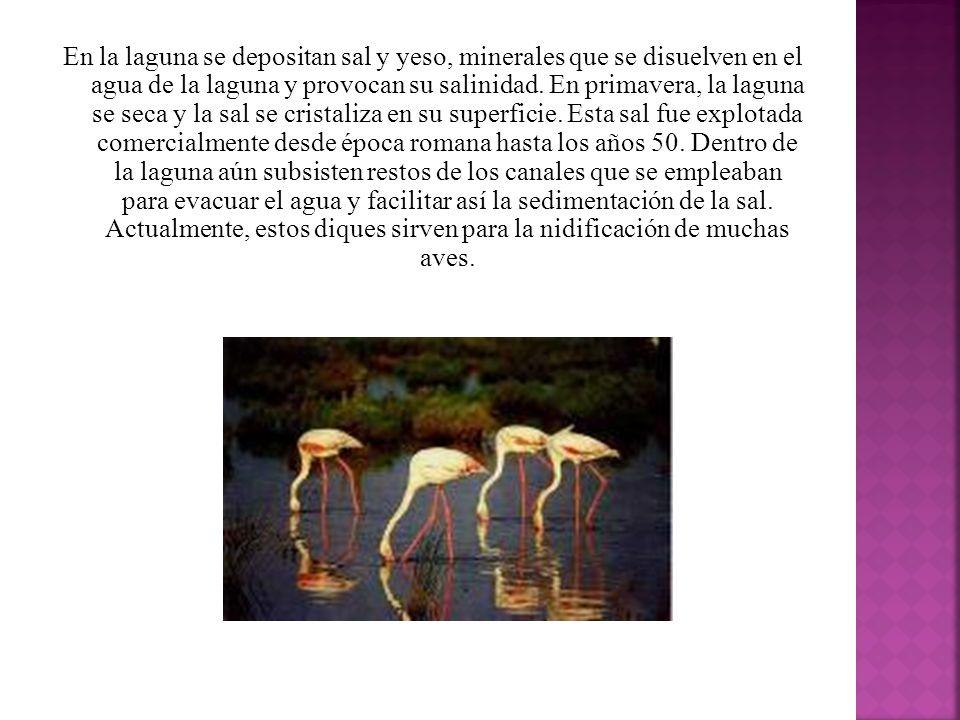 En la laguna se depositan sal y yeso, minerales que se disuelven en el agua de la laguna y provocan su salinidad.
