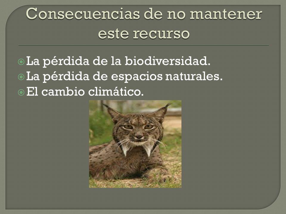 La pérdida de la biodiversidad. La pérdida de espacios naturales. El cambio climático.
