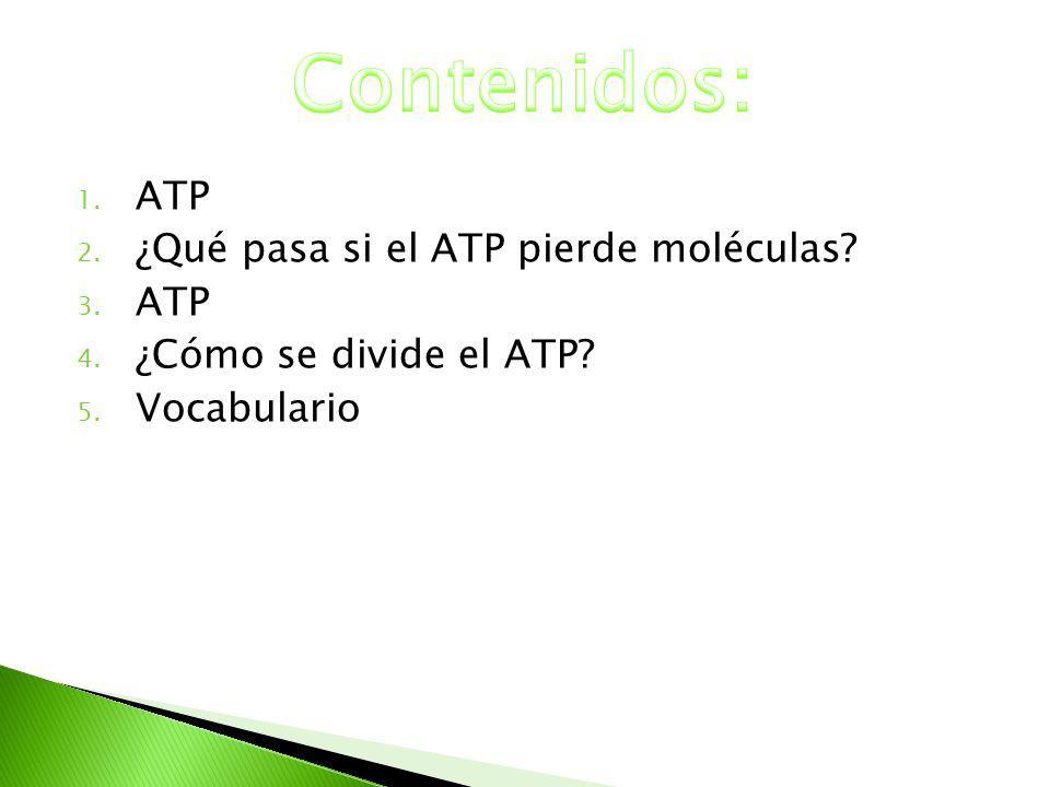 1. ATP 2. ¿Qué pasa si el ATP pierde moléculas? 3. ATP 4. ¿Cómo se divide el ATP? 5. Vocabulario