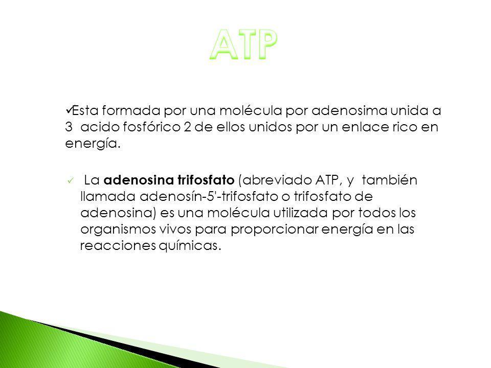 La adenosina trifosfato (abreviado ATP, y también llamada adenosín-5'-trifosfato o trifosfato de adenosina) es una molécula utilizada por todos los or