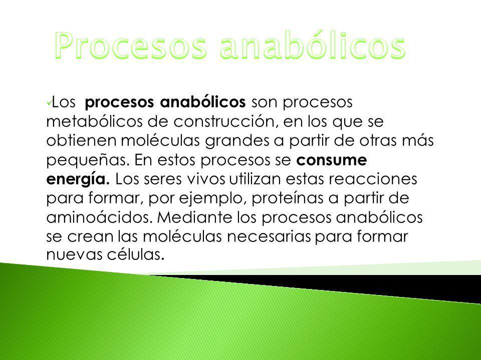 Los procesos anabólicos son procesos metabólicos de construcción, en los que se obtienen moléculas grandes a partir de otras más pequeñas. En estos pr