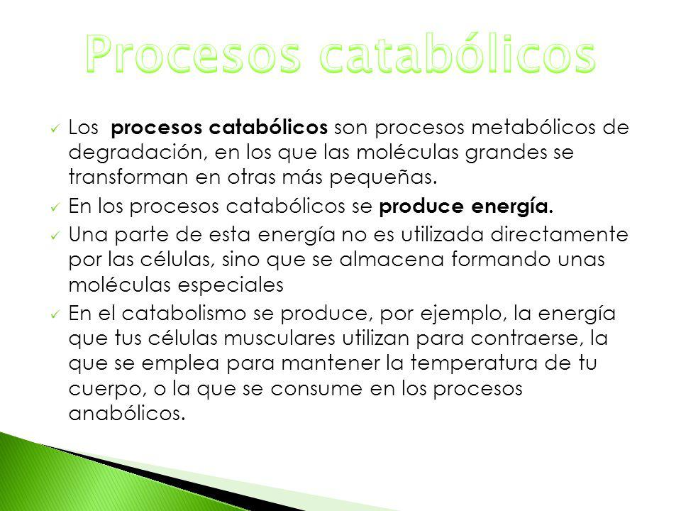 Los procesos catabólicos son procesos metabólicos de degradación, en los que las moléculas grandes se transforman en otras más pequeñas. En los proces