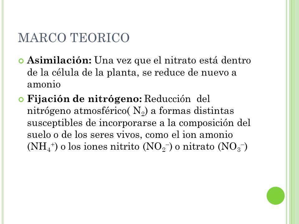 MARCO TEORICO Asimilación: Una vez que el nitrato está dentro de la célula de la planta, se reduce de nuevo a amonio Fijación de nitrógeno: Reducción