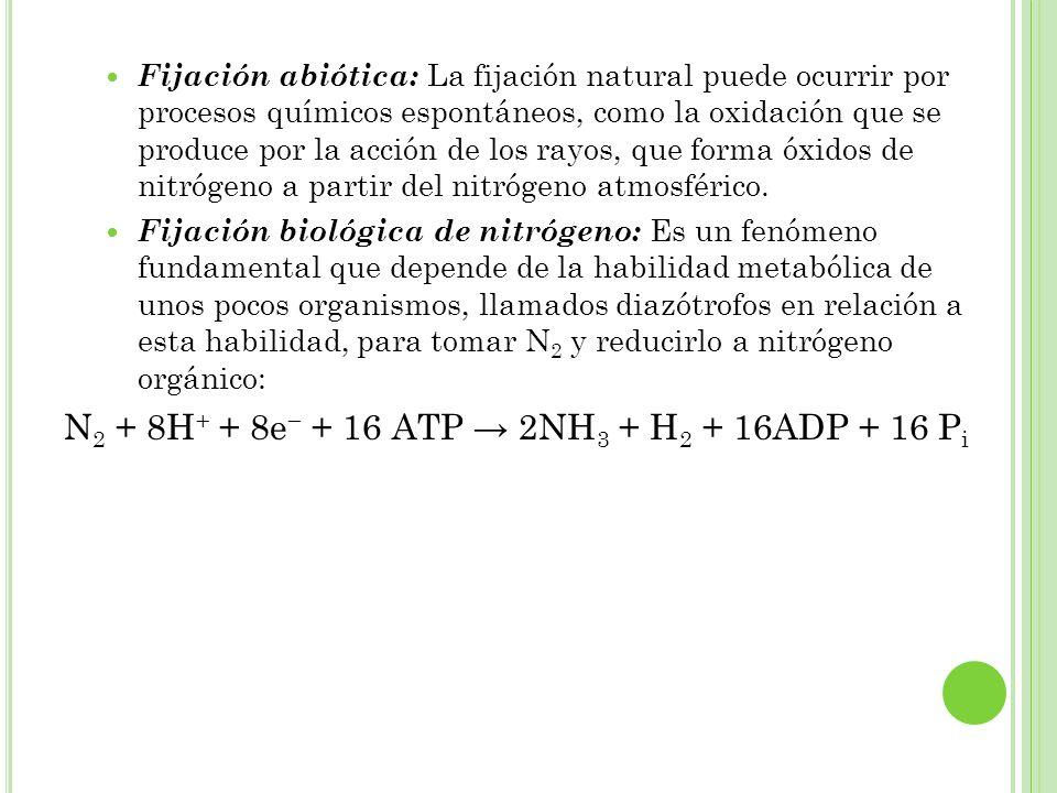Fijación abiótica: La fijación natural puede ocurrir por procesos químicos espontáneos, como la oxidación que se produce por la acción de los rayos, q