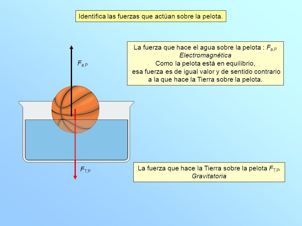 Identifica las fuerzas que actúan sobre la pelota. La fuerza que hace la Tierra sobre la pelota F T,P. Gravitatoria La fuerza que hace el agua sobre l
