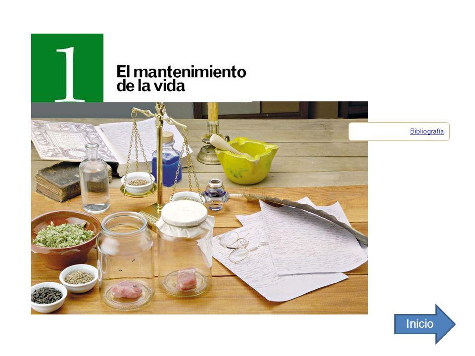 ALIMENTACIÓN Y NUTRICIÓN ENERGÍA MATERIA II.