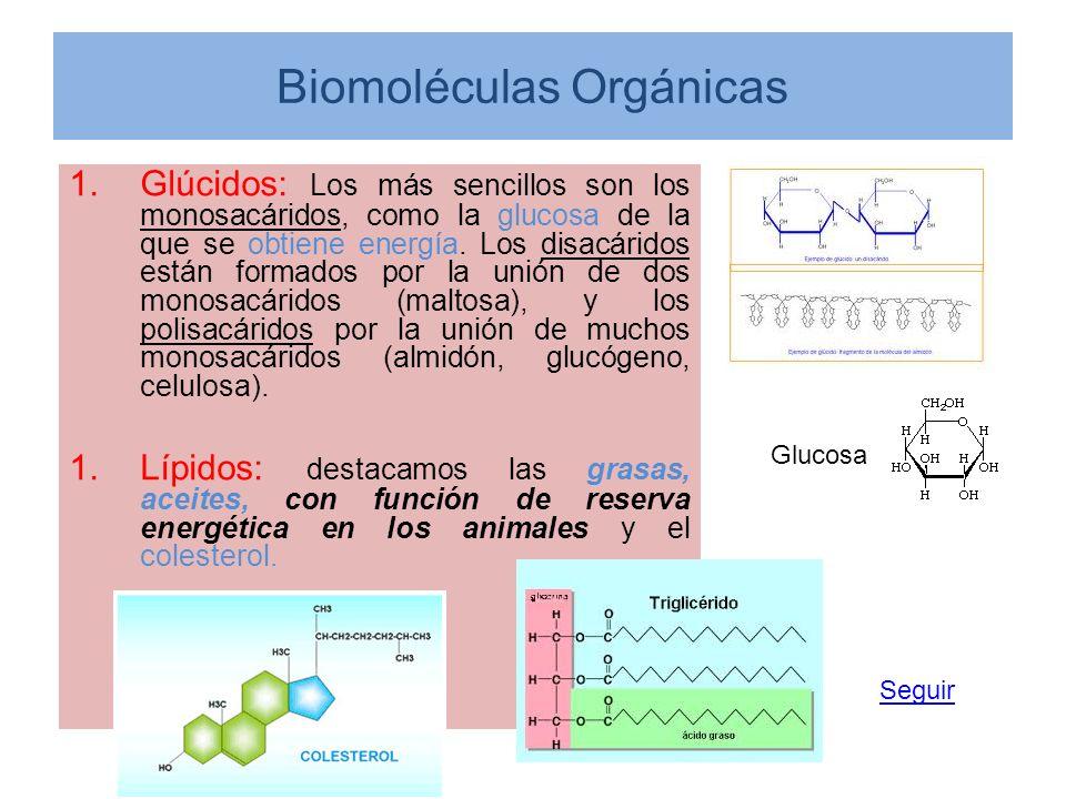 Biomoléculas Orgánicas 1.Glúcidos: Los más sencillos son los monosacáridos, como la glucosa de la que se obtiene energía. Los disacáridos están formad