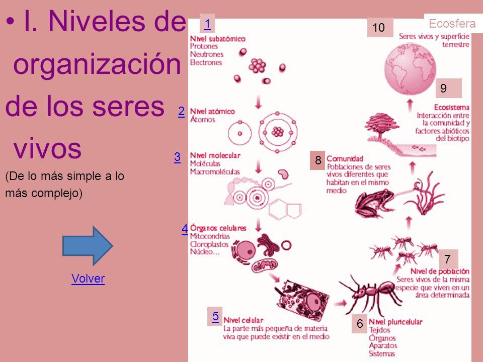 I. Niveles de organización de los seres vivos (De lo más simple a lo más complejo) 1 2 3 4 5 6 7 8 9 10 Ecosfera Volver