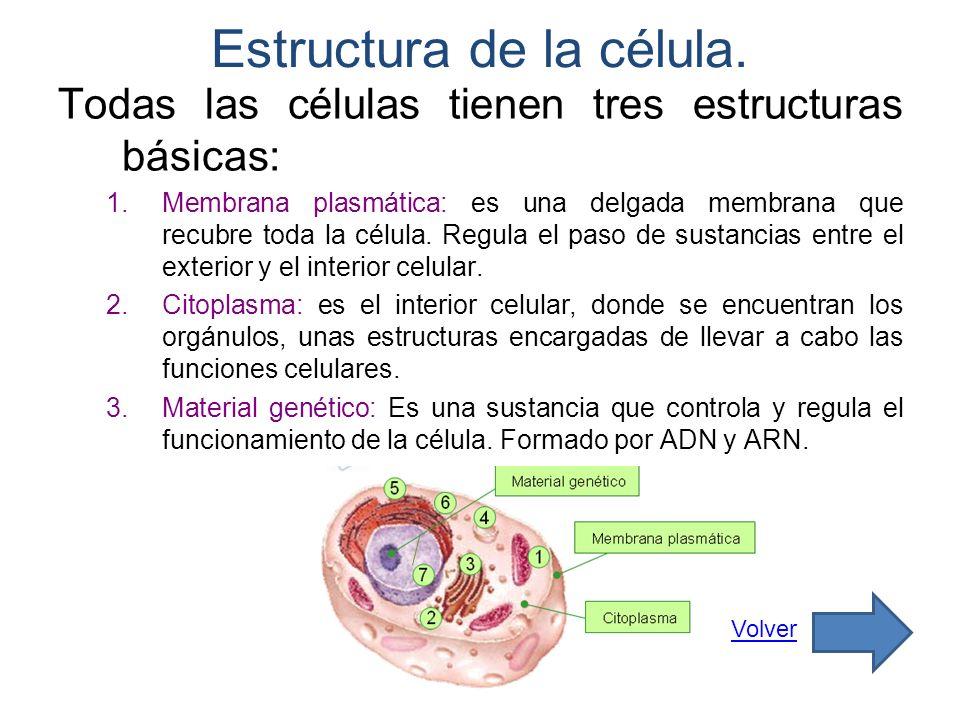 Estructura de la célula. Todas las células tienen tres estructuras básicas: 1.Membrana plasmática: es una delgada membrana que recubre toda la célula.