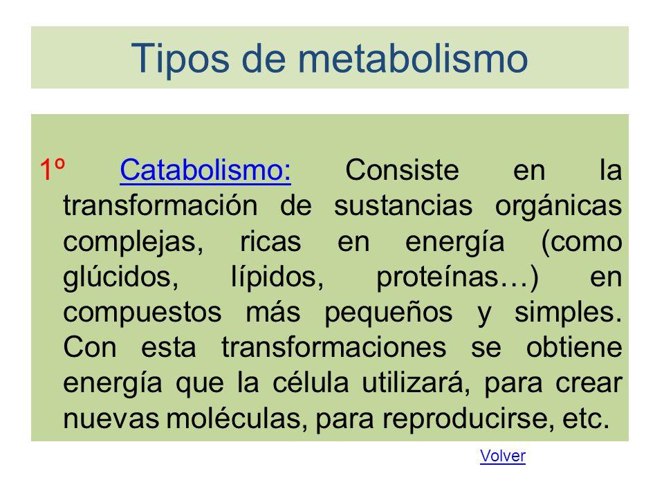 Tipos de metabolismo 1º Catabolismo: Consiste en la transformación de sustancias orgánicas complejas, ricas en energía (como glúcidos, lípidos, proteí