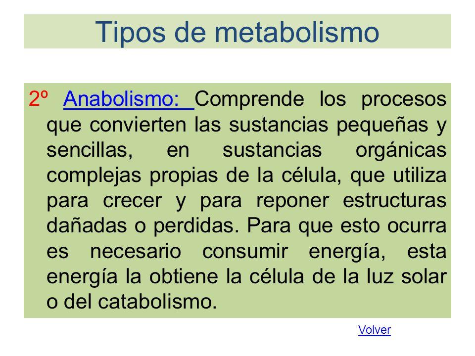 Tipos de metabolismo 2º Anabolismo: Comprende los procesos que convierten las sustancias pequeñas y sencillas, en sustancias orgánicas complejas propi