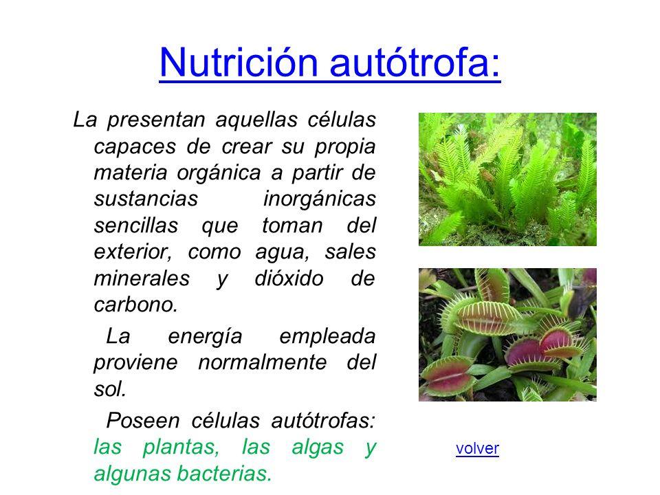 Nutrición autótrofa: La presentan aquellas células capaces de crear su propia materia orgánica a partir de sustancias inorgánicas sencillas que toman