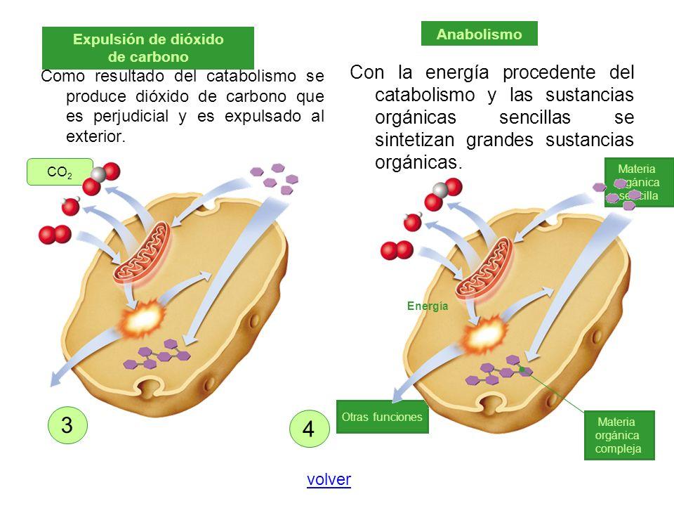 Como resultado del catabolismo se produce dióxido de carbono que es perjudicial y es expulsado al exterior. Con la energía procedente del catabolismo