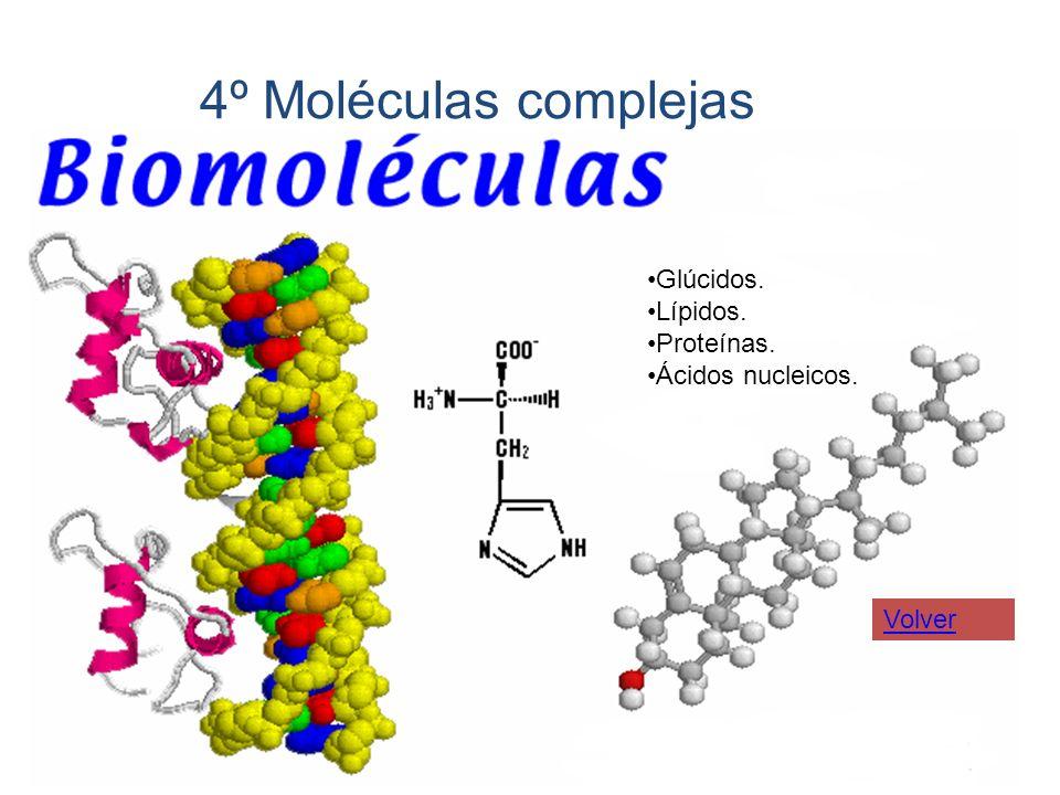 4º Moléculas complejas Glúcidos. Lípidos. Proteínas. Ácidos nucleicos. Volver