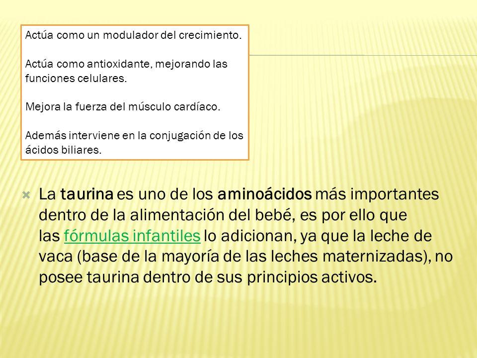 La taurina es uno de los aminoácidos más importantes dentro de la alimentación del bebé, es por ello que las fórmulas infantiles lo adicionan, ya que