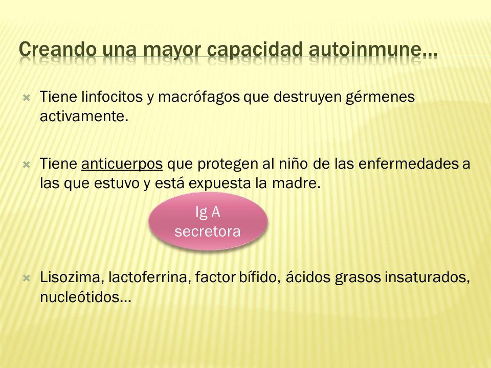 Tiene linfocitos y macrófagos que destruyen gérmenes activamente. Tiene anticuerpos que protegen al niño de las enfermedades a las que estuvo y está e