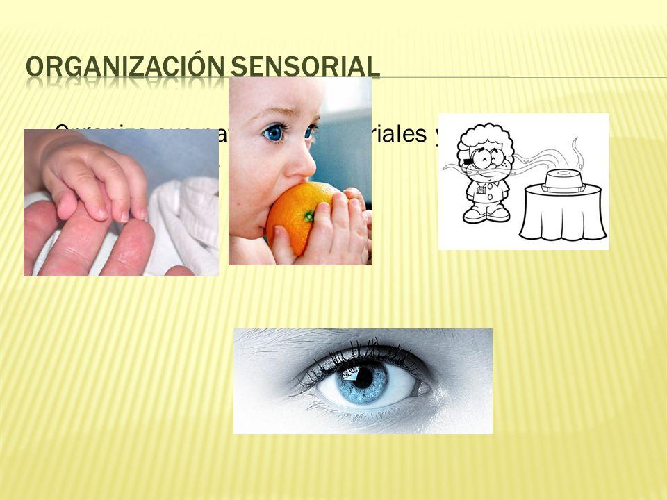 Organiza sus patrones sensoriales y gratifica profundamente sus sentidos