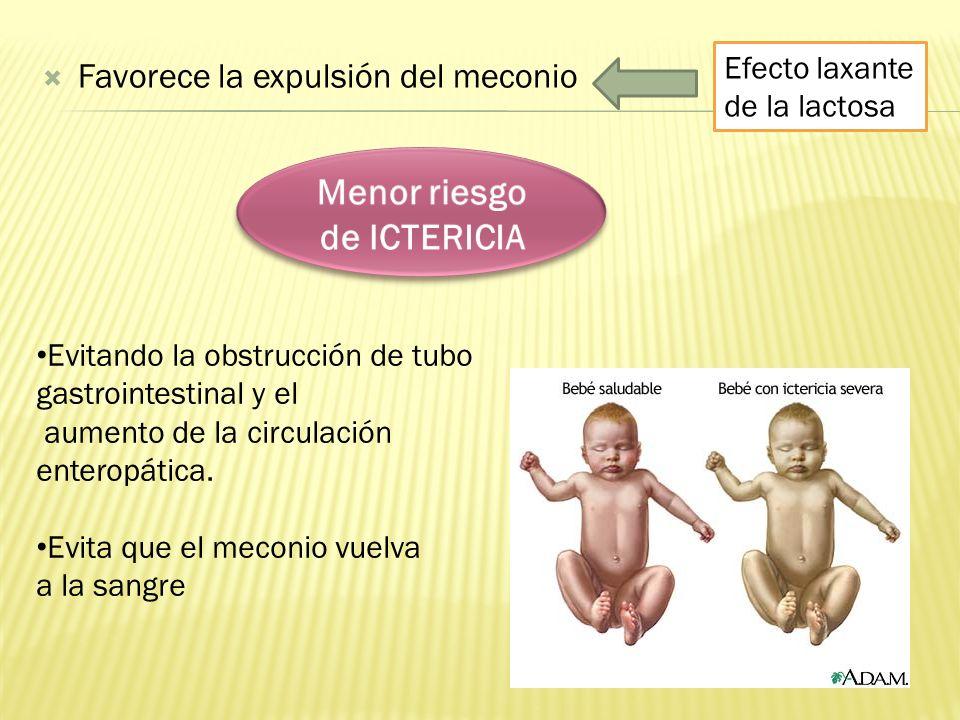 Estimulación del crecimiento y maduración intestinal Estimulación de la motilidad intestinal (prostaglandinas).