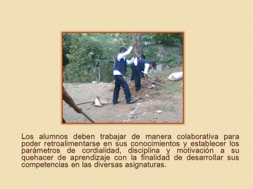 USO DE LOS NOPALES Los nopales se utilizan para el impermeabilizante ecológico de la escuela.