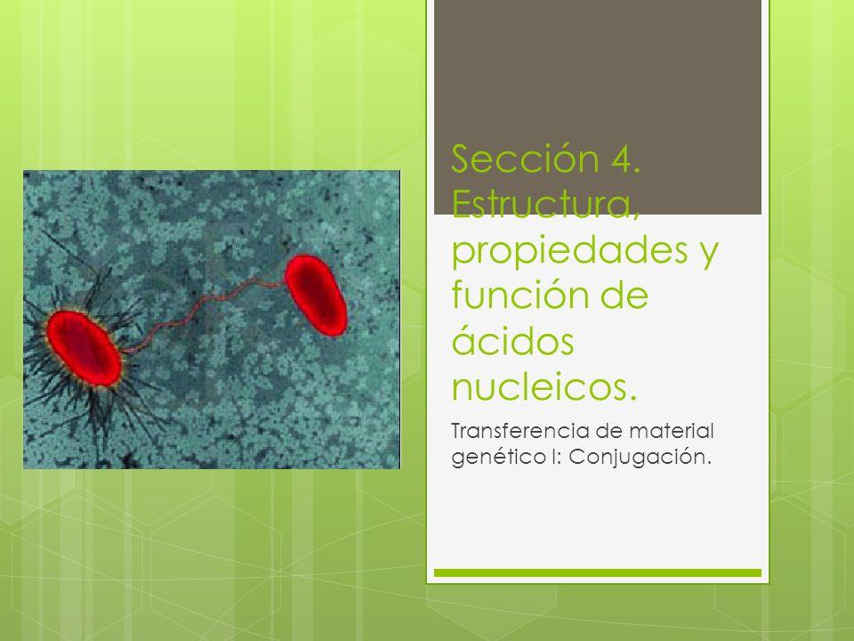 Sección 4.Estructura, propiedades y función de ácidos nucleicos.