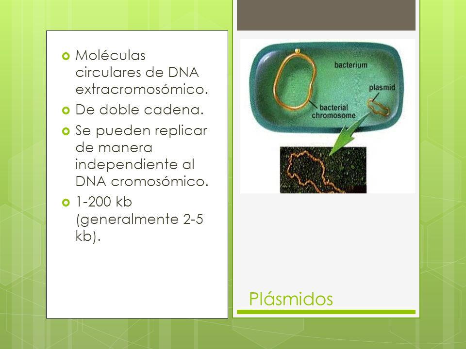 Moléculas circulares de DNA extracromosómico.De doble cadena.