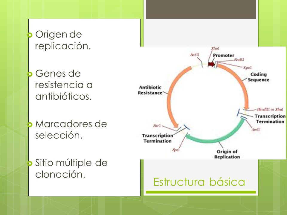 Origen de replicación.Genes de resistencia a antibióticos.