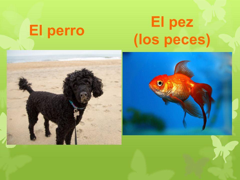 El perro El pez (los peces)