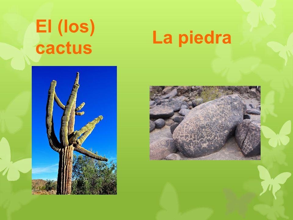 El (los) cactus La piedra