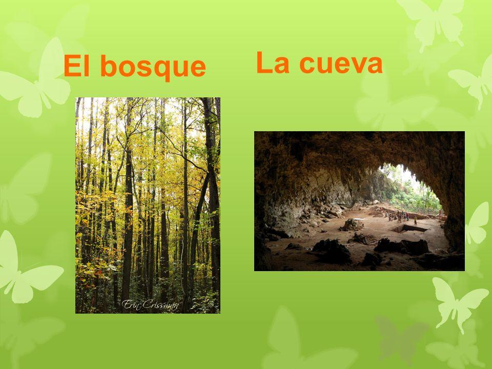 El bosque La cueva