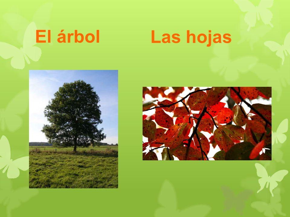 El árbol Las hojas