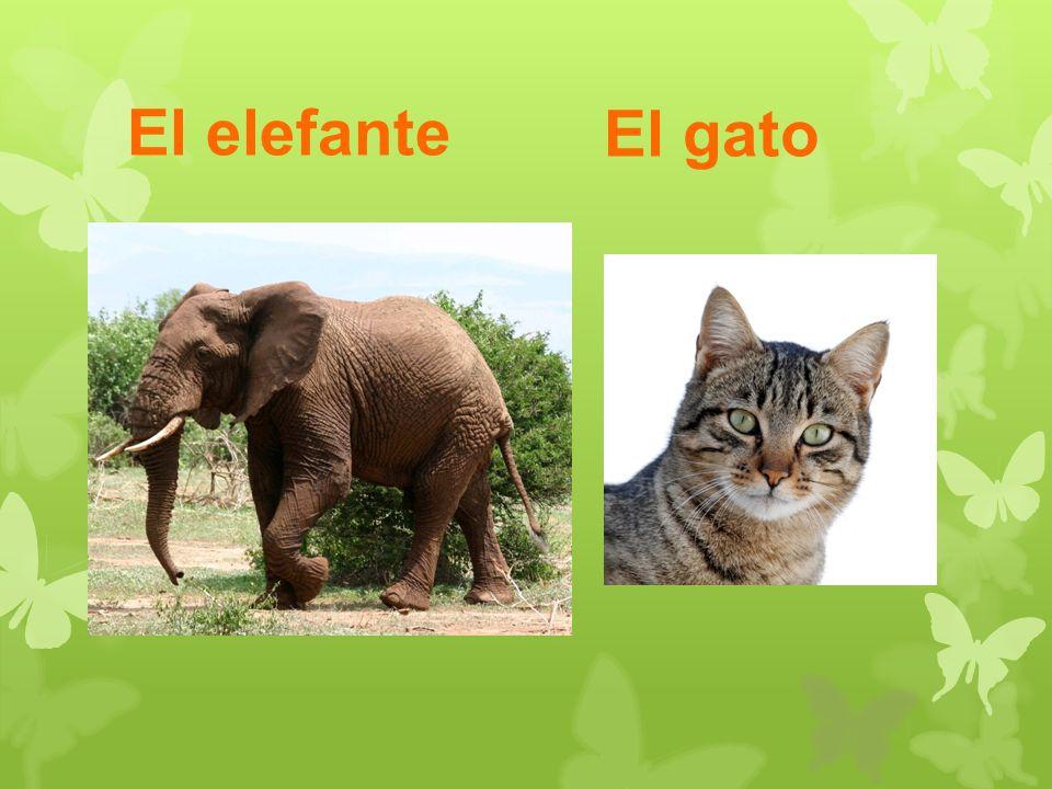 El elefante El gato