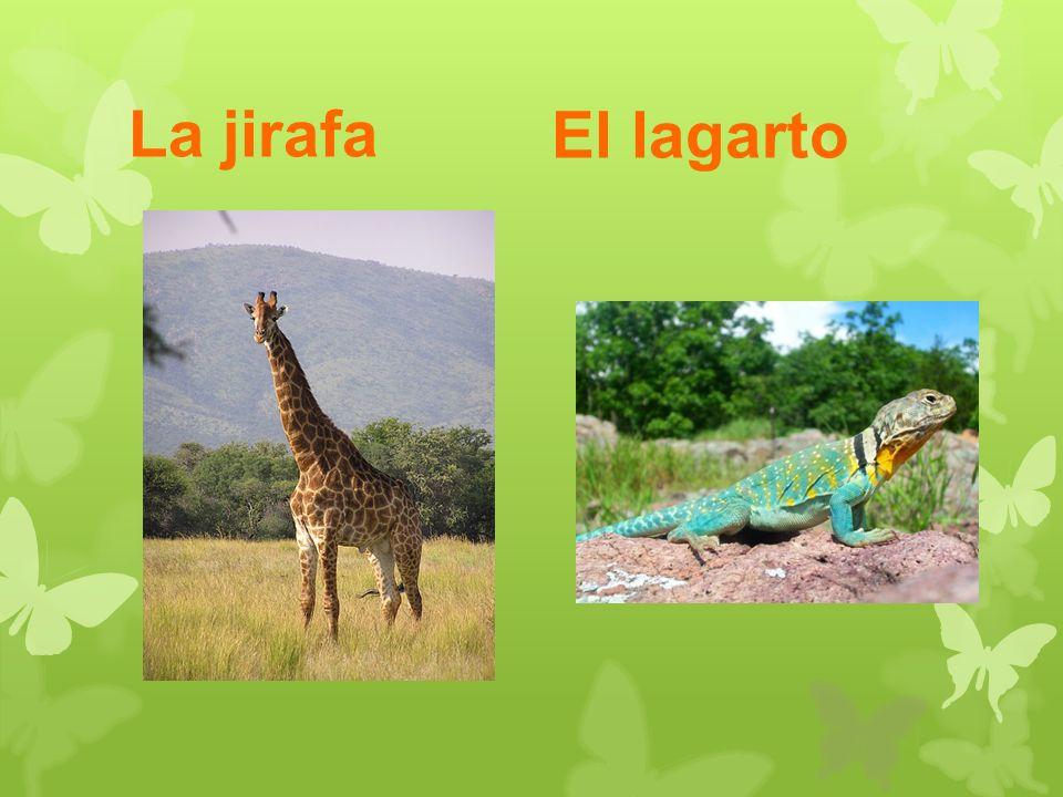 La jirafa El lagarto