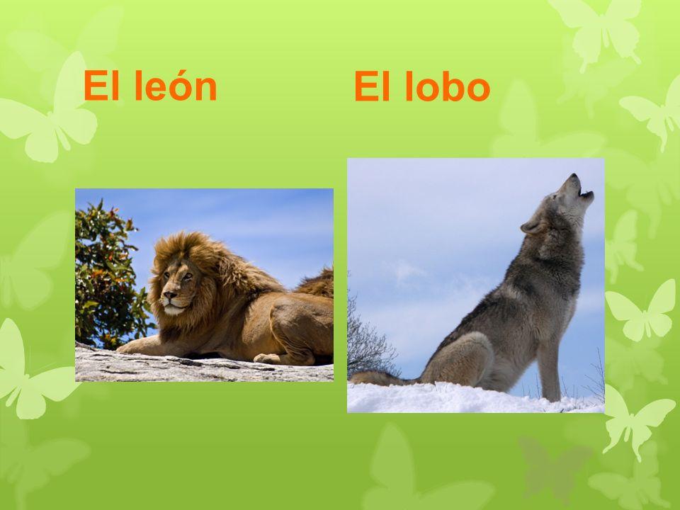El león El lobo