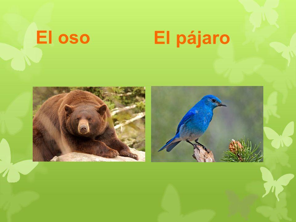 El oso El pájaro