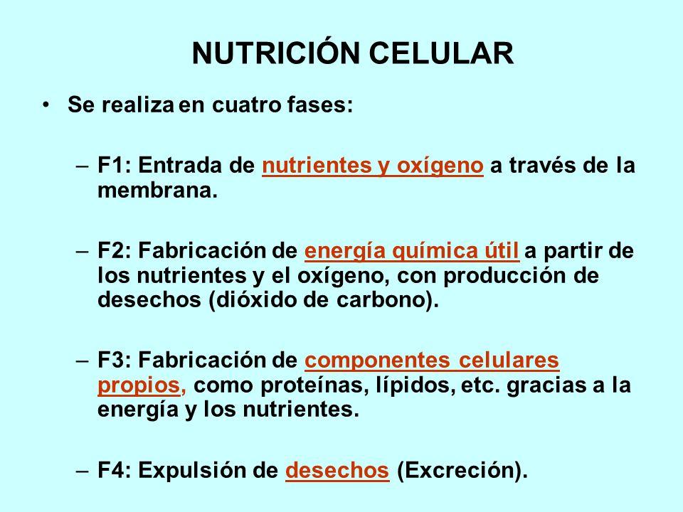 NUTRICIÓN CELULAR Se realiza en cuatro fases: –F1: Entrada de nutrientes y oxígeno a través de la membrana.