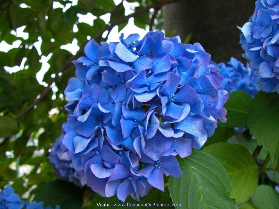 Visita: www.RenuevoDePlenitud.comwww.RenuevoDePlenitud.com