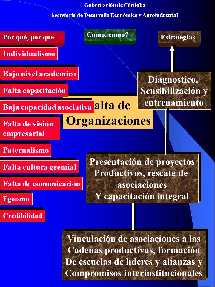 Gobernación de Córdoba Secretaria de Desarrollo Económico y Agroindustrial Falta de Organizaciones Falta de Organizaciones Por qué, por que Cómo, cómo.