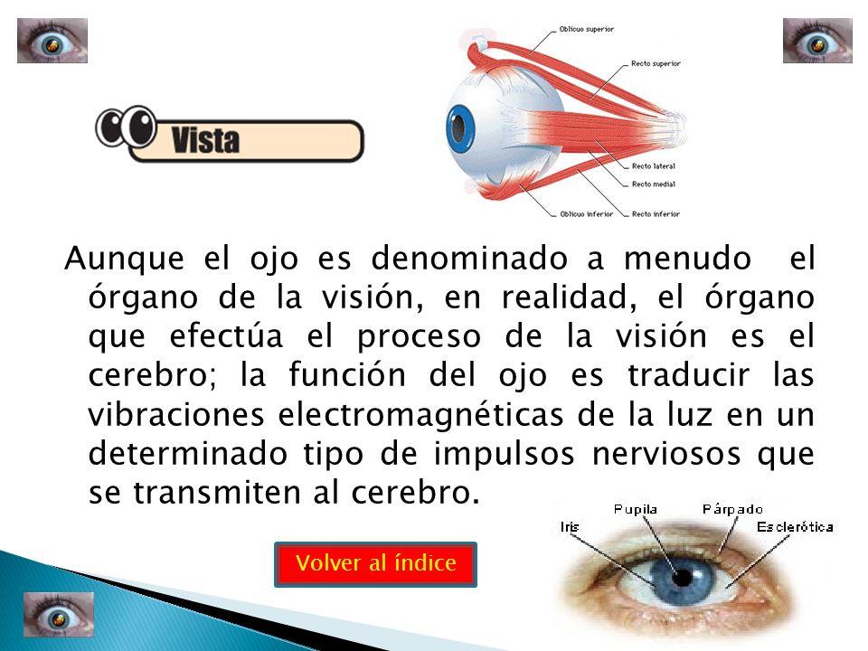 Aunque el ojo es denominado a menudo el órgano de la visión, en realidad, el órgano que efectúa el proceso de la visión es el cerebro; la función del