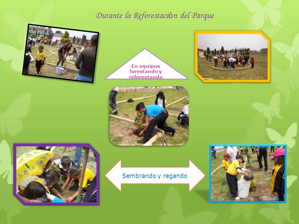 Parque Limpio y Reforestado Listo para recrear a la comunidad del Casco de San Juan Misión cumplida en la primer parte, ¡ahora a cuidarlo continuamente con mantenimiento y mas forestación!