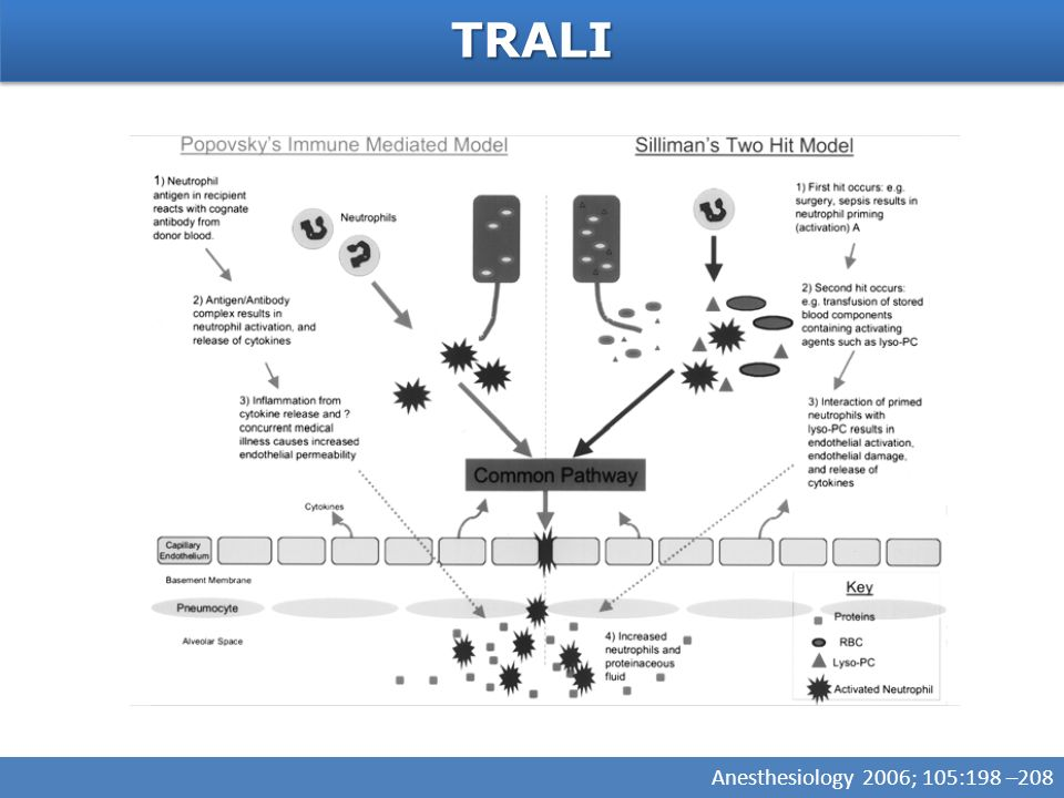 TRALITRALI Anesthesiology 2006; 105:198 –208
