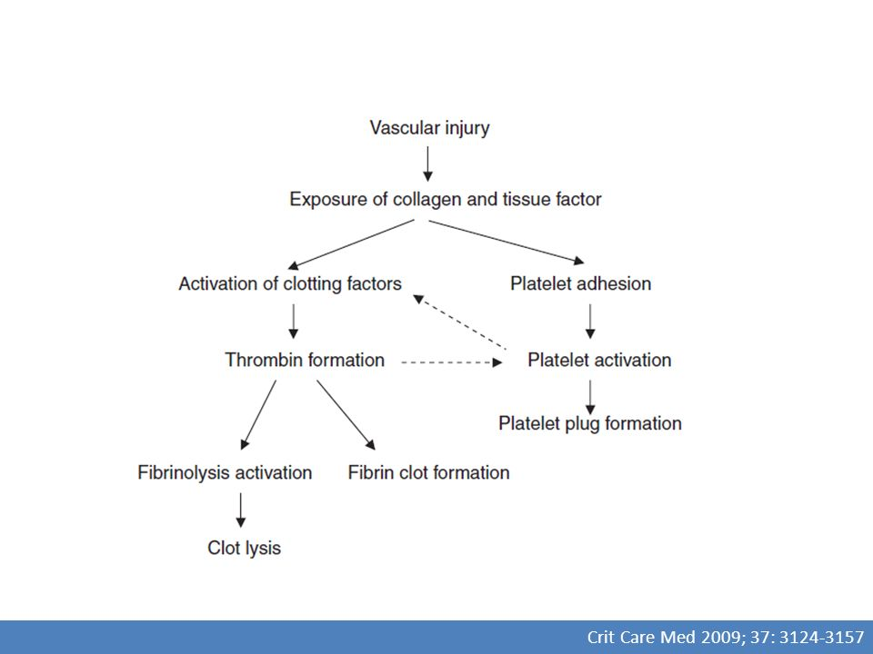 Reacción a la transfusión Anesthesiology 2006; 105:198 –208