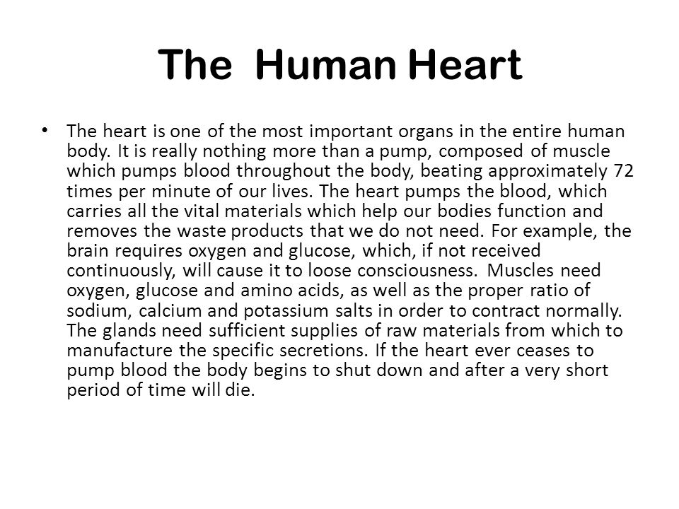 The Human Heart The heart is one of the most important organs in the entire human body.