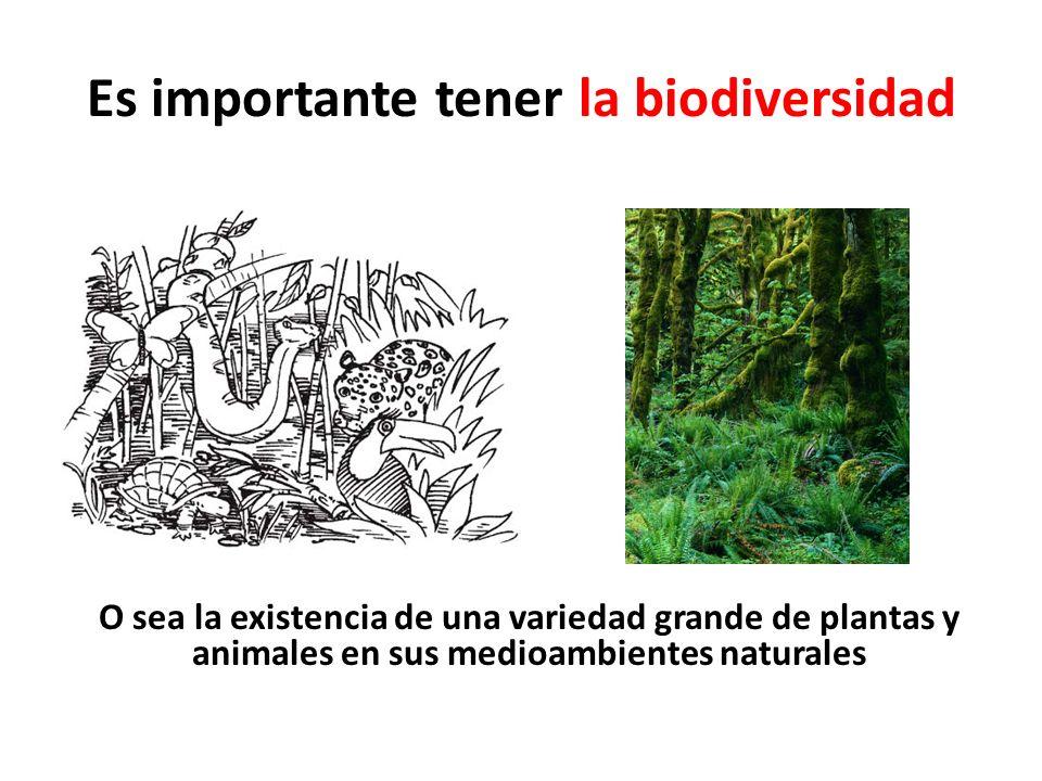 Es importante tener la biodiversidad O sea la existencia de una variedad grande de plantas y animales en sus medioambientes naturales