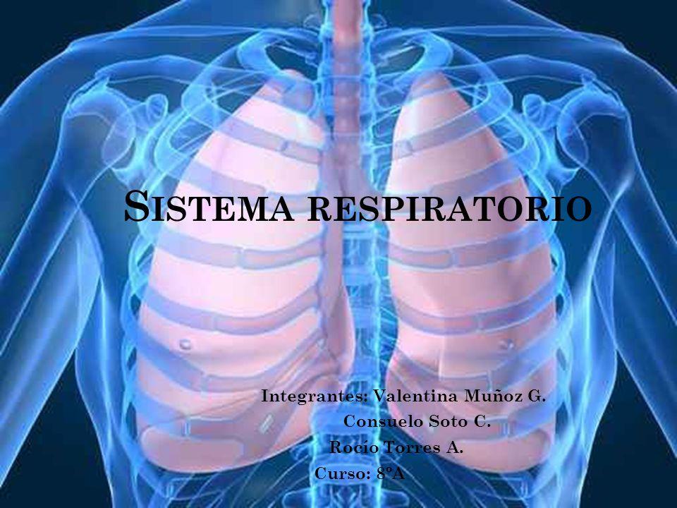 INTRODUCCIÓN En este trabajo vamos a aprender acerca de las partes del sistema respiratorio, su función y ubicación en el cuerpo humano También aprenderemos sobre el recorrido del aire y el proceso de oxigenación, células que ayudan en este proceso y las maneras en la cuales se transporta.