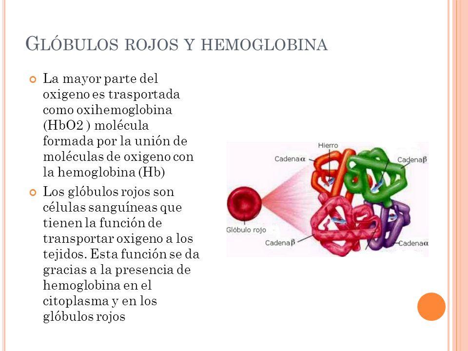 G LÓBULOS ROJOS Y HEMOGLOBINA La mayor parte del oxigeno es trasportada como oxihemoglobina (HbO2 ) molécula formada por la unión de moléculas de oxig