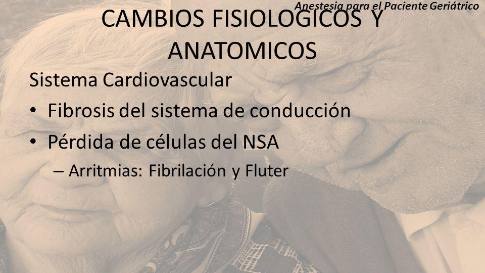 CAMBIOS FISIOLOGICOS Y ANATOMICOS Sistema Cardiovascular Fibrosis del sistema de conducción Pérdida de células del NSA – Arritmias: Fibrilación y Flut