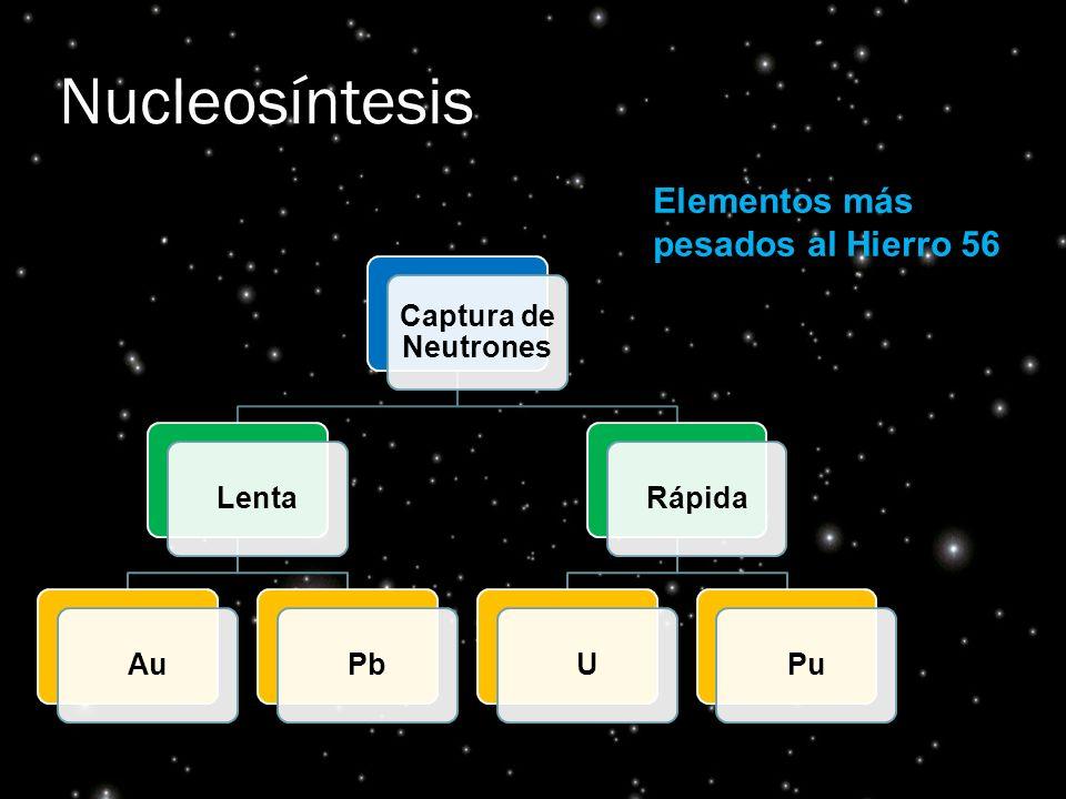 Nucleosíntesis Captura de Neutrones LentaAuPbRápidaUPu Elementos más pesados al Hierro 56